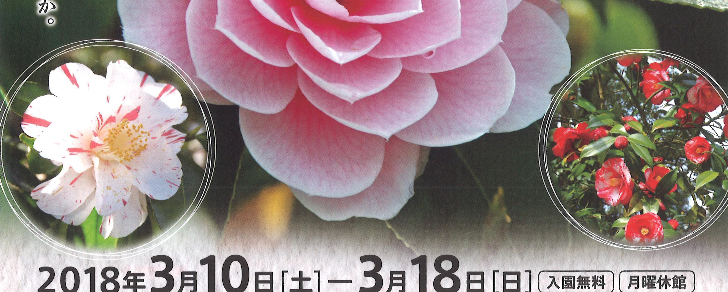 春の花まつり2018 つばきまつり