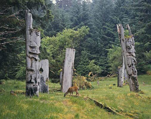 トーテムポールのそばで草をはむ鹿<br /> (カナダ、ハイダ・グワイ)<br />